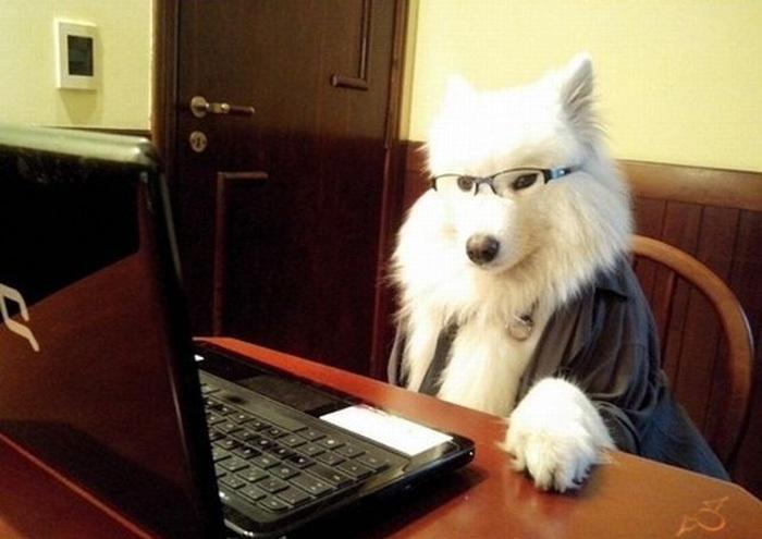 动物图片-搜狗哈哈